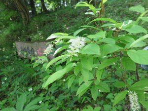 IMG_0017ズイナと樹林墓地