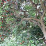 IMG_0337ヤマモモ樹林頂上