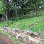 樹林墓地・木の精
