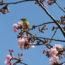 桜の開花状況<2019/02/24>