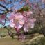 桜の開花状況<2019/03/08>
