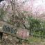 桜の開花状況<2019/03/10>