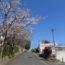 桜の開花状況<2019/04/02>