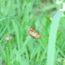 梅雨が明けました!<2019/07/30>