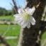 ジュウガツザクラが咲きました!<2019/10/05>