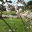 2020年1月~3月 桜葬の見学とミニ講座のお知らせ