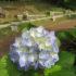 梅雨前の苑内<2020/06/09>